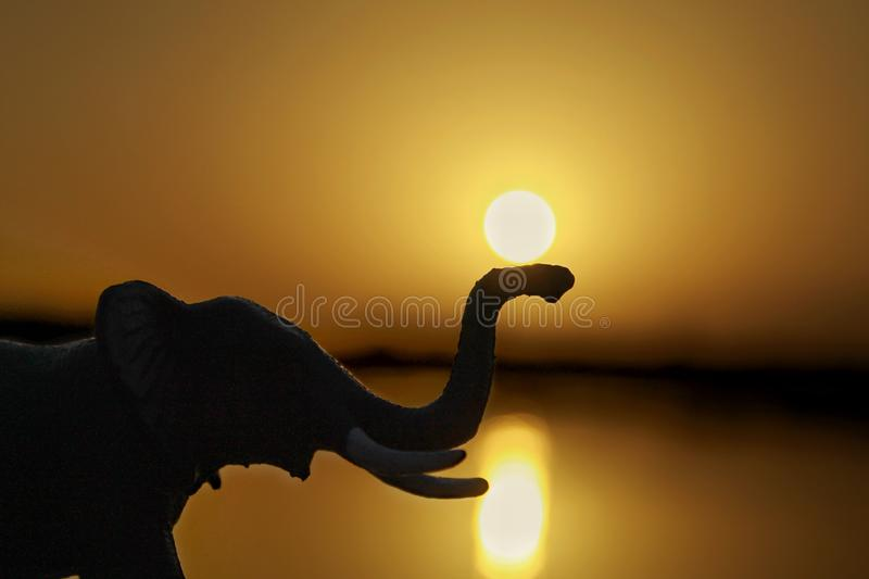 The sun and elephant during sunset royalty free stock images