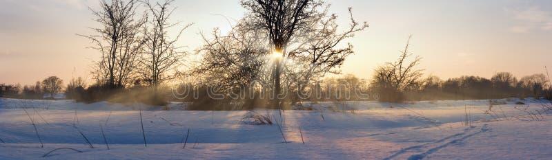 Sun em uma árvore no inverno foto de stock royalty free