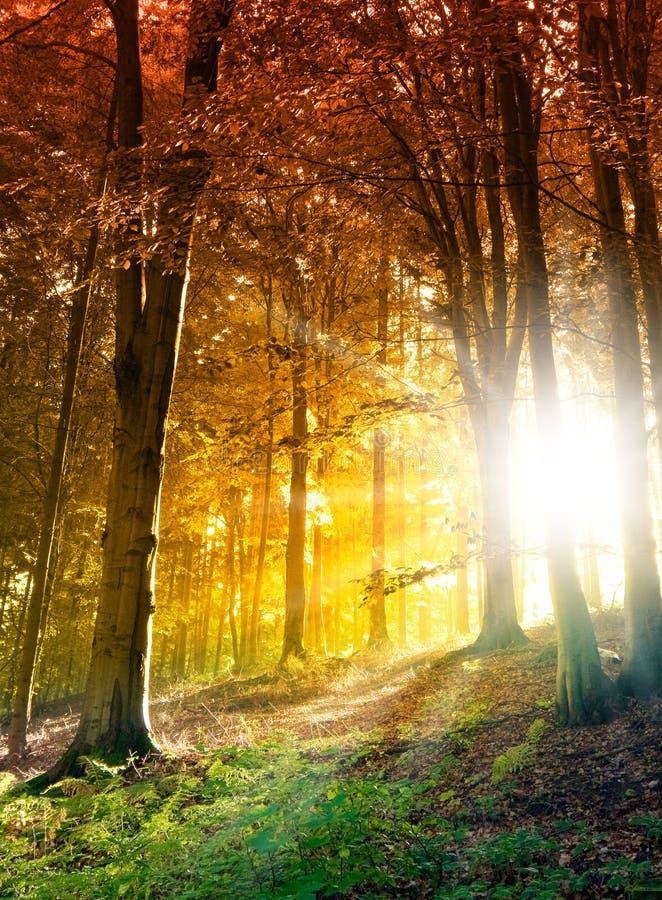 Sun en el bosque del otoño foto de archivo libre de regalías
