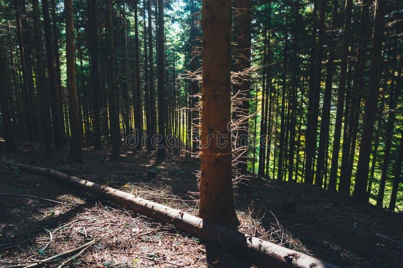 Sun encendió árboles imagenes de archivo