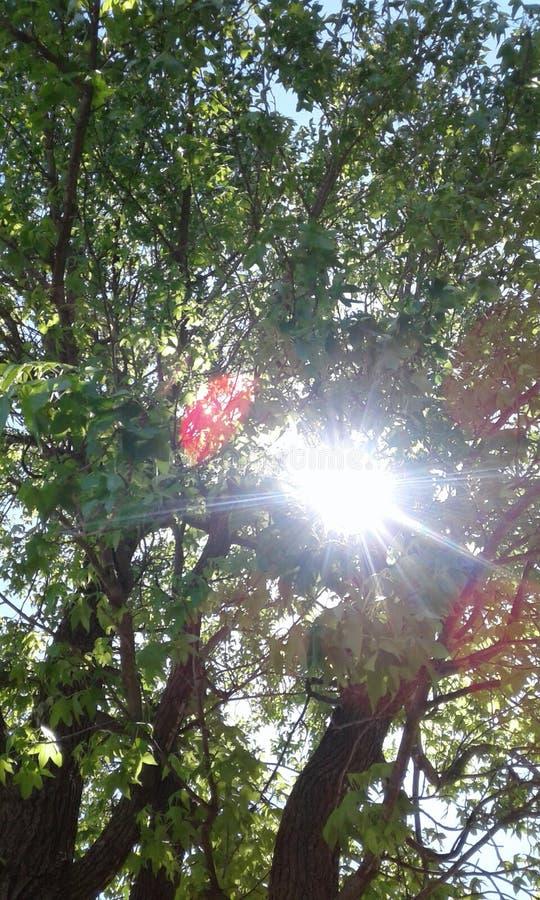 Sun-Entweichen stockbilder