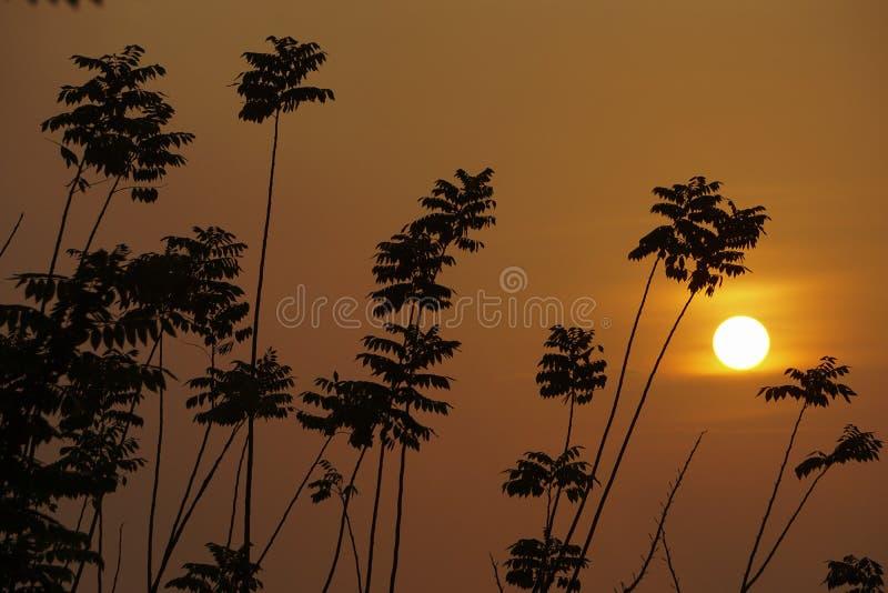 Sun erscheint hinter einem Baum stockfotos