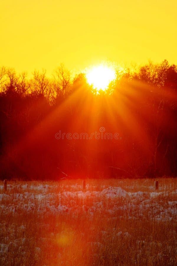 The Sun estalló sobre la hilera de árboles en una madrugada fría fotos de archivo libres de regalías