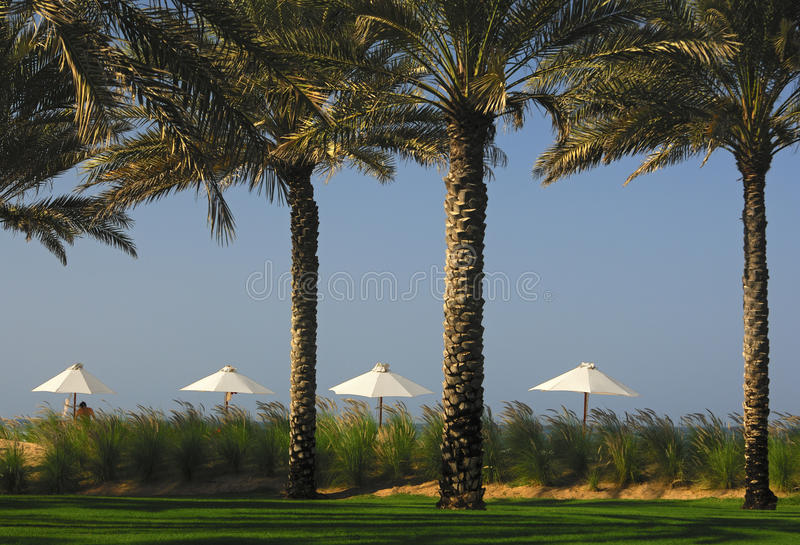Sun-Farbtöne In Einem Tropischen Paradies Lizenzfreies Stockfoto