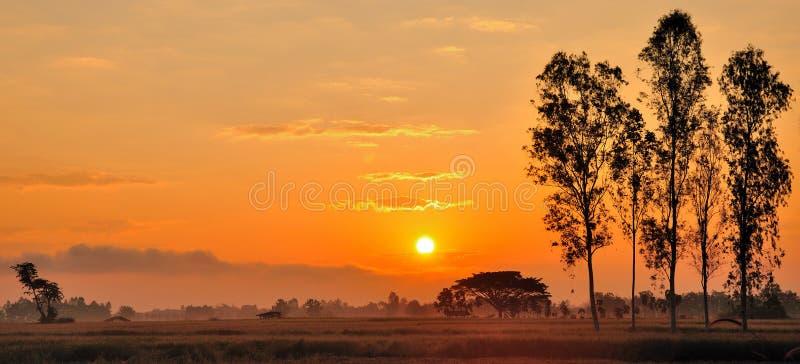 Sun fijó en el campo del arroz imagen de archivo