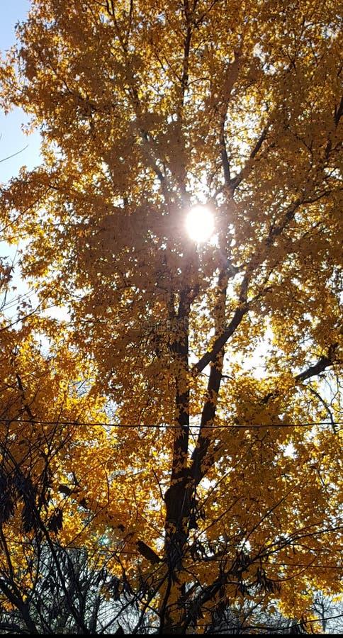 Sun filterte durch Gelb lizenzfreie stockfotos