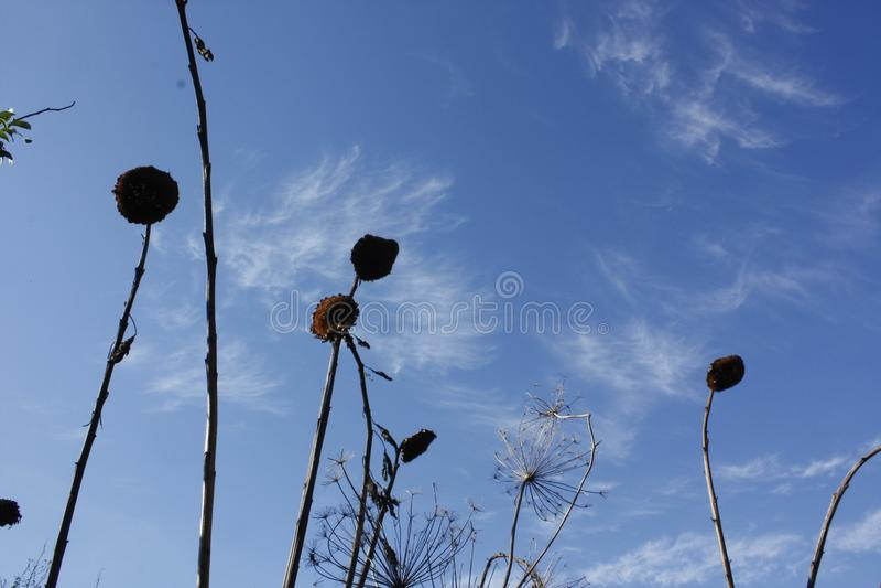 Sun florece siluetas en un cielo azul claro fotografía de archivo