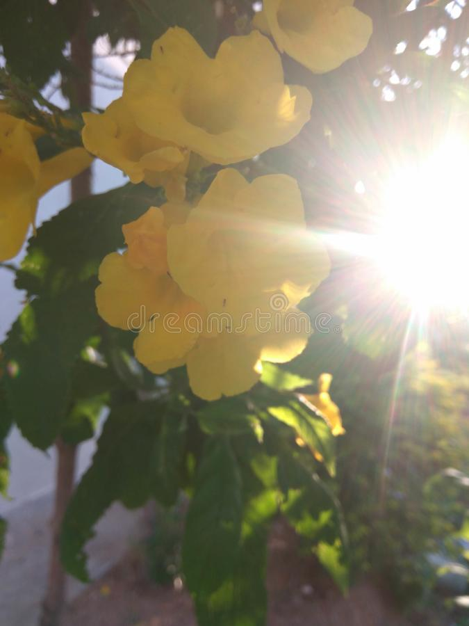 The sun and the flower royalty free stock photography