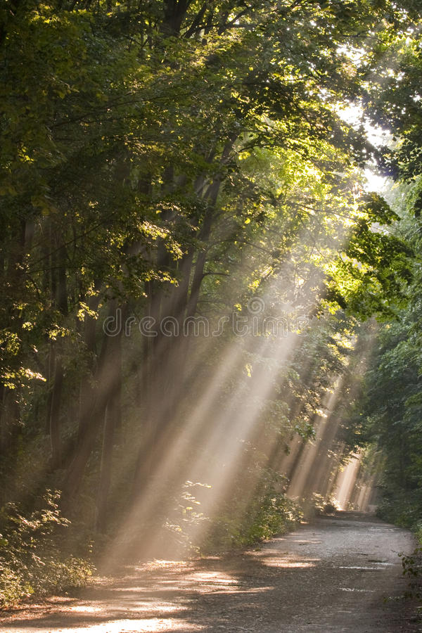 Sun fog in forest stock photography
