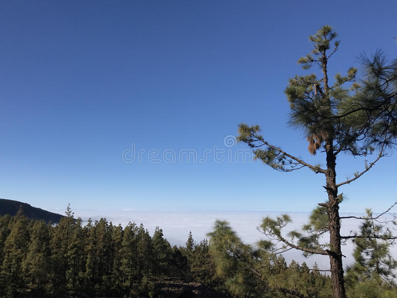 Sun and forest above the clouds. At Teide National Park on Tenerife stock images