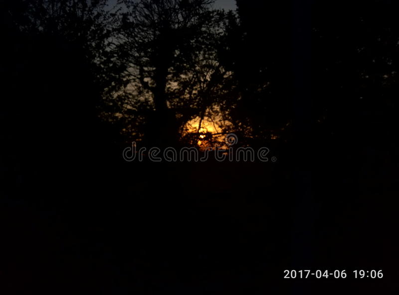 Sun through the forest royalty free stock photography