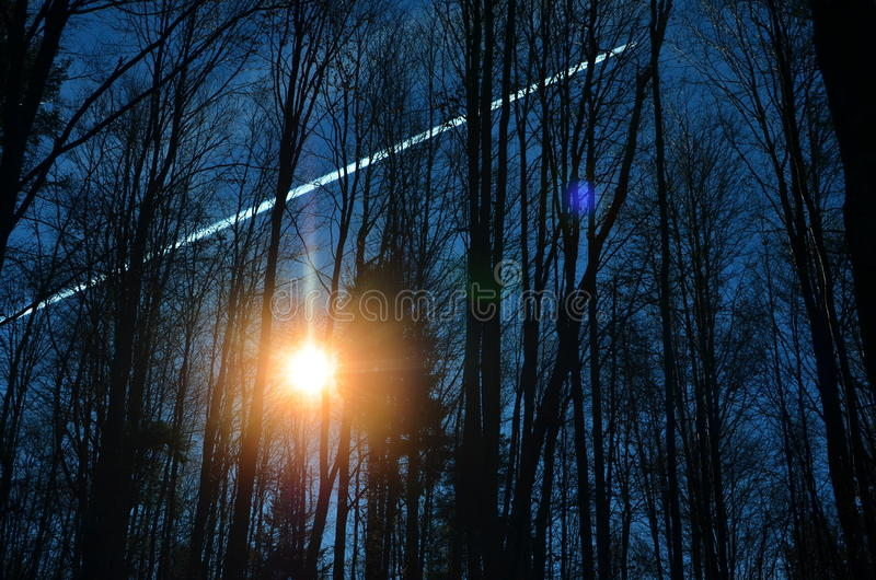 Sun in the forest. High straight black silhouettes of naked autumn trees, unusual color of the Sun lighting through the trees canopy and clear blue sky make this stock images