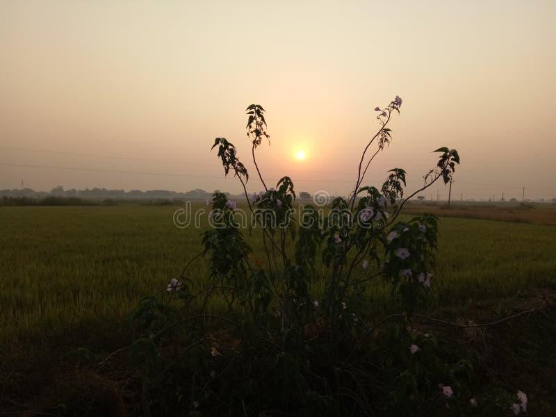 Sun foto stock photo