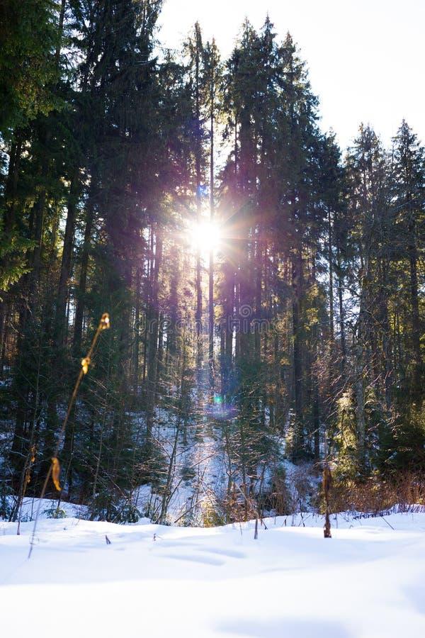 Sun fra gli alberi fotografie stock
