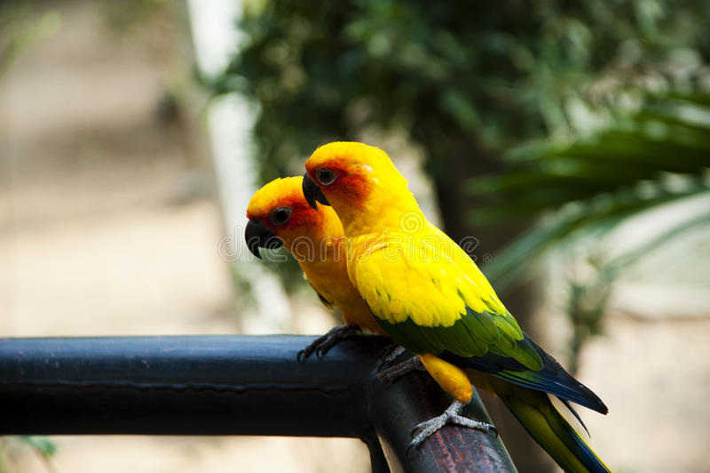 Sun Genoa Court Bird royaltyfri bild