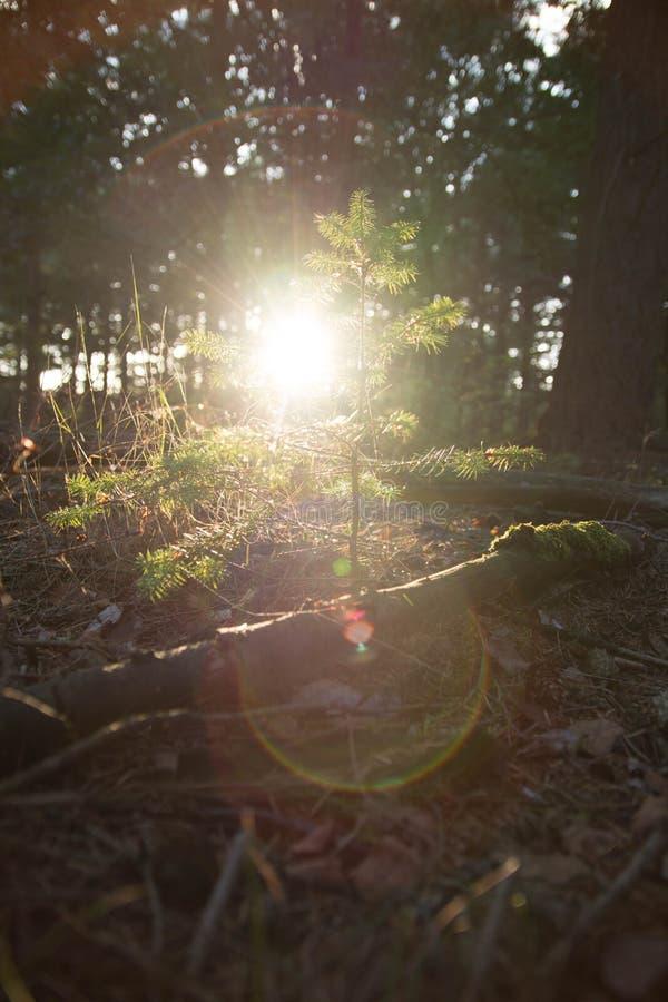 Sun-Glanz auf einem jungen Baum lizenzfreie stockbilder