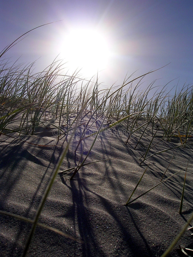 Sun-Gras-Sand stockfotos