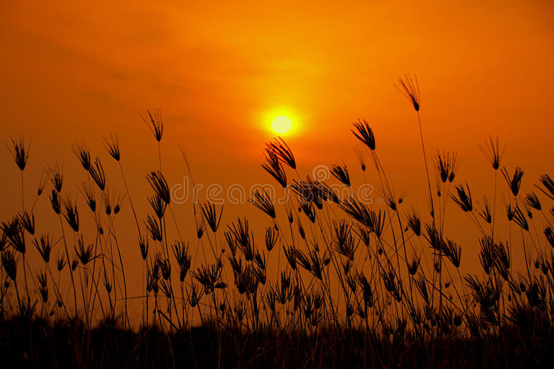 Sun And Grass royalty free stock photography