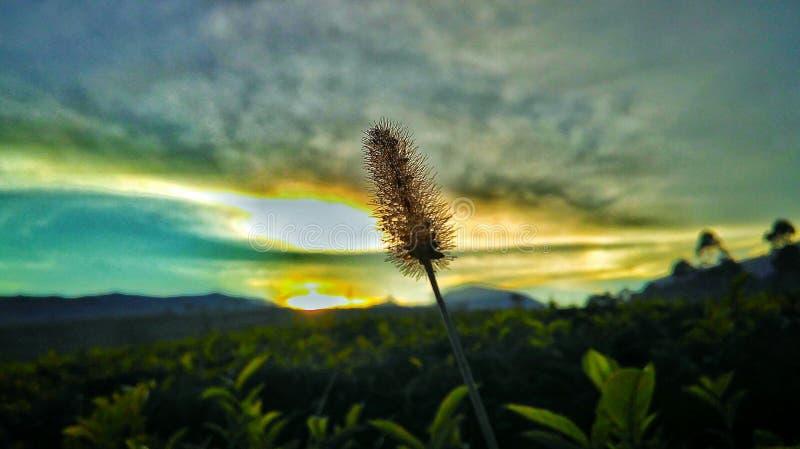 Sun and Grass royalty free stock photos