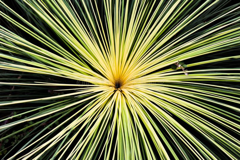 A sun from the ground royalty free stock photography
