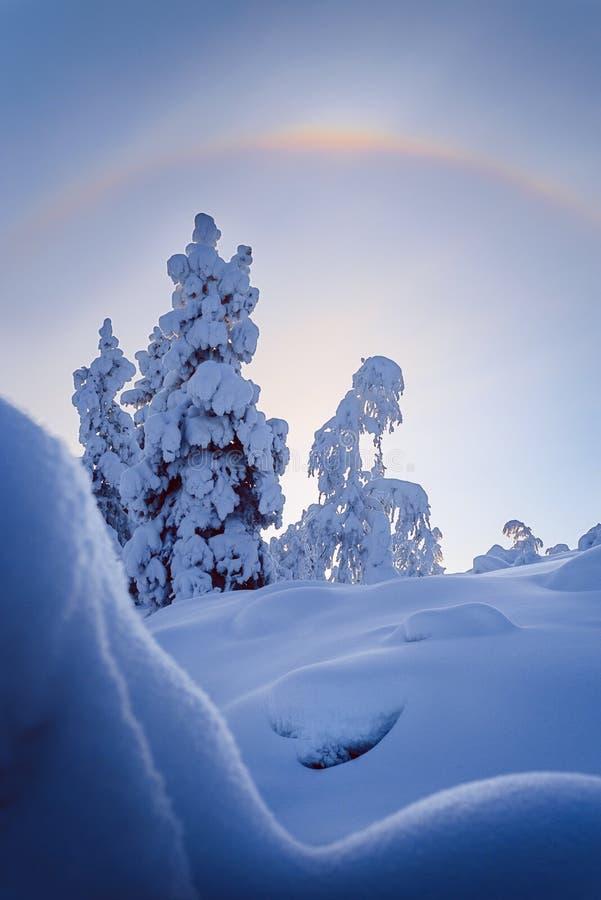 Winter in the taiga forest. Sun halo framing trees in taiga. Atmospheric phenomenon very rare outside polar regions and winter season stock image
