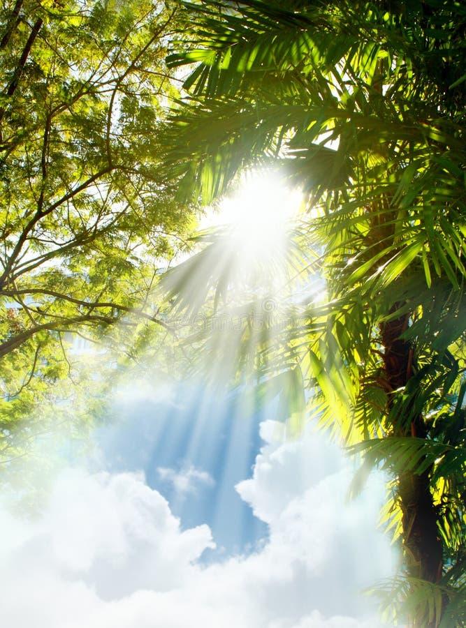 Sun-helle Strahlen durch Bäume stockfoto