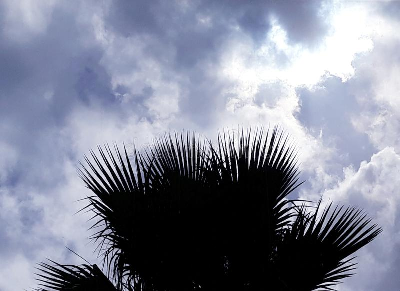 Sun hidden behind clouds and the silhouette of palm trees. Sun hidden behind clouds silhouette palm trees royalty free stock photography