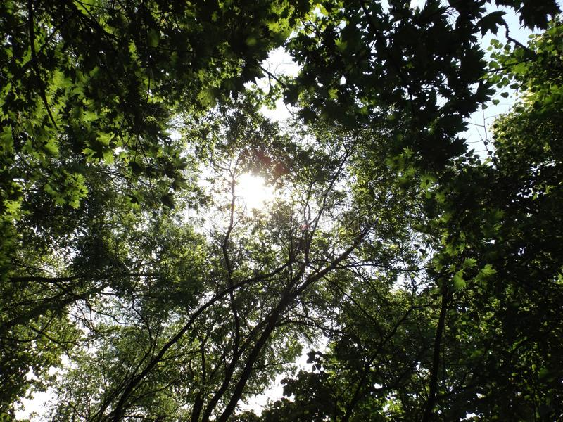 Sun hidden among the trees royalty free stock images