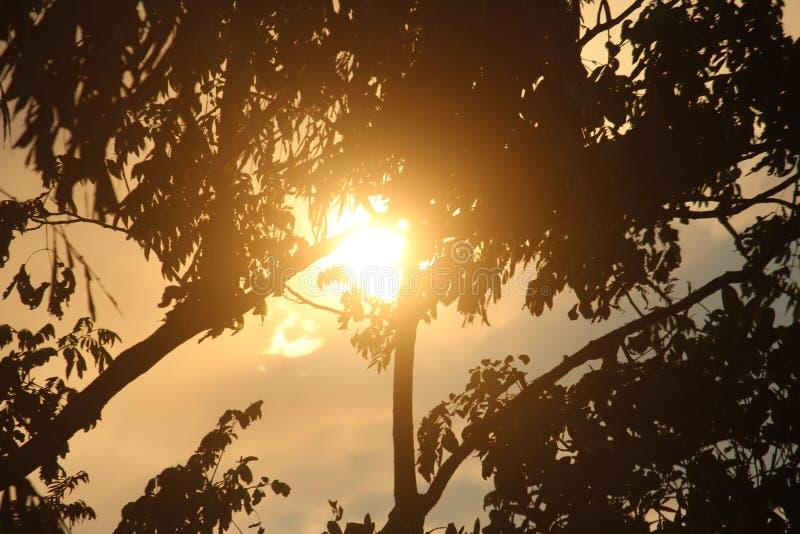 Sun hiding behind the tress. Sunkiss royalty free stock photos