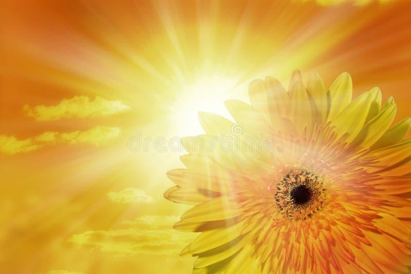 Sun-Himmel-Blumen-Hintergrund lizenzfreie stockfotografie