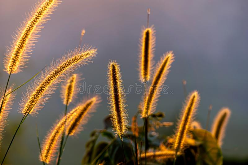 The sun hits the grass. The flower has a light orange shade from the sun royalty free stock image