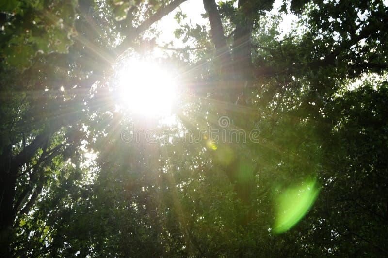 Sun i skogen royaltyfri bild