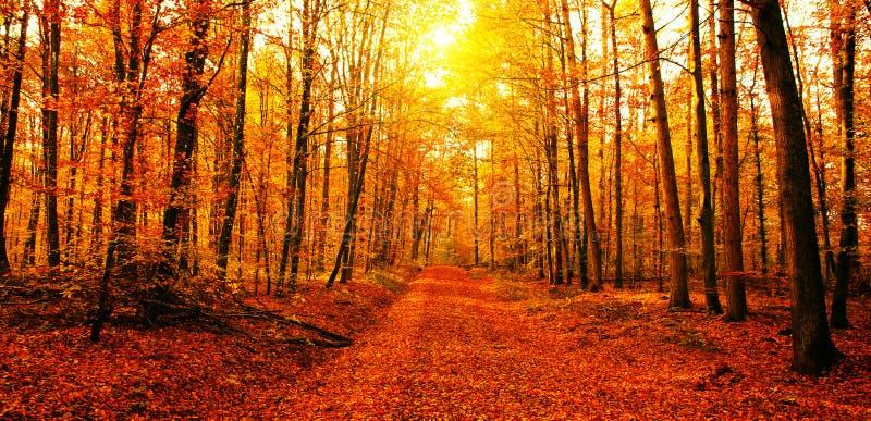 Sun im Herbstwald stockfoto