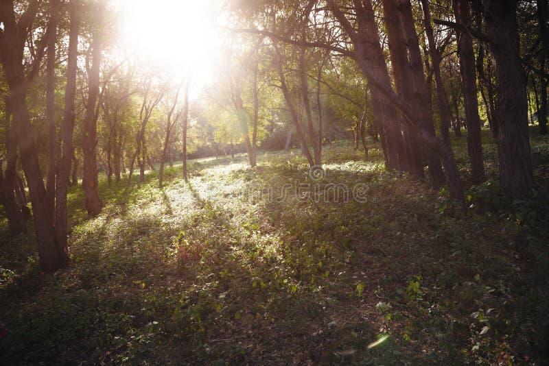 Sun im Wald stockbilder