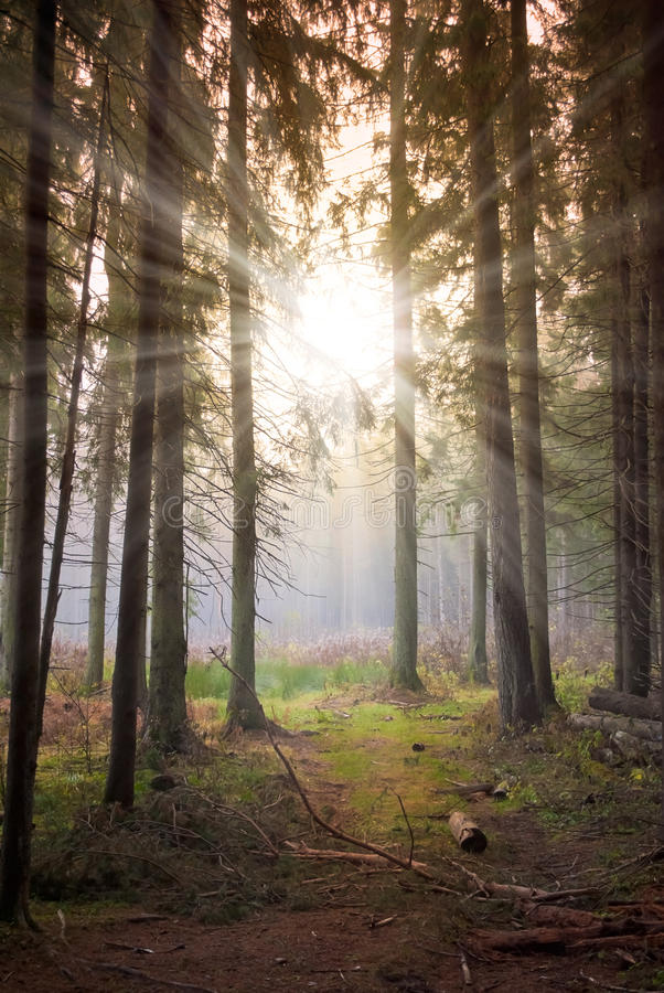Free Sun In Forest Stock Photo - 17786760