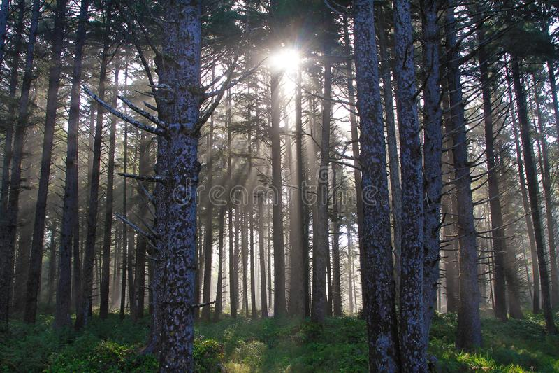 Sun irradia el bosque de Oregon fotografía de archivo
