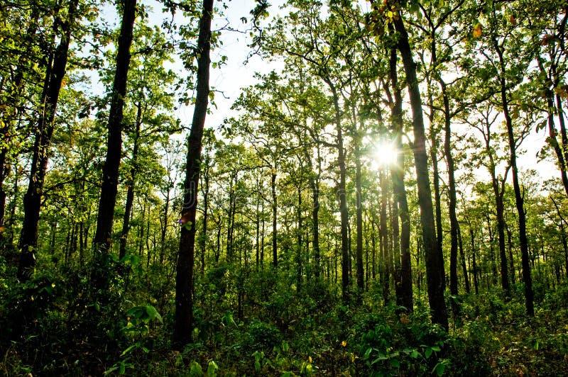 Sun irradia el brillo en el bosque imagenes de archivo
