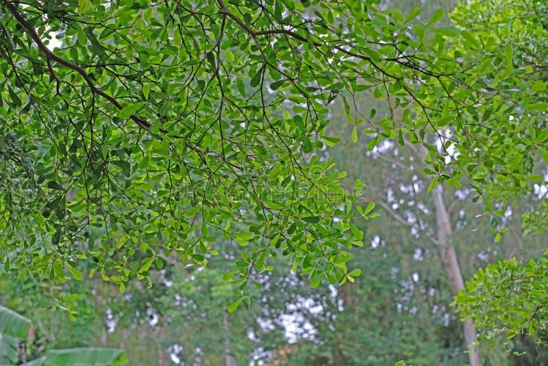 Sun irradia el brillo a través de árboles, fondo de la naturaleza foto de archivo libre de regalías