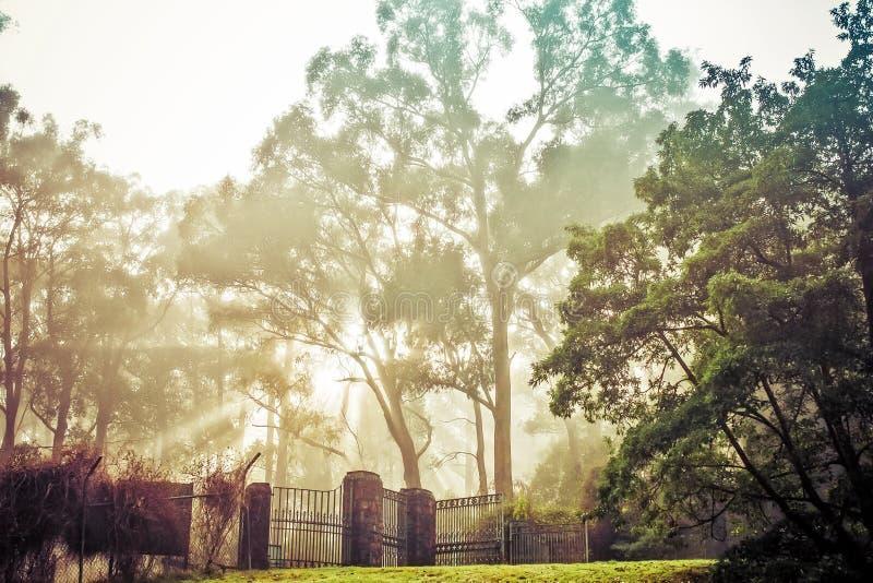 Sun irradia en el paisaje hermoso de la niebla de la mañana del fenc del jardín foto de archivo libre de regalías