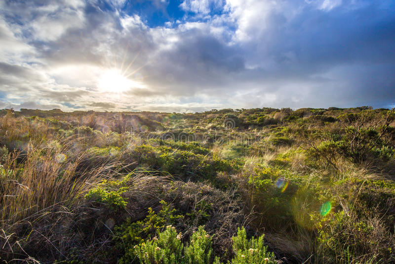 Sun irradia la perforación a través de las nubes pesadas sobre un campo de los arbustos de la playa, gran camino del océano, Aust imagenes de archivo