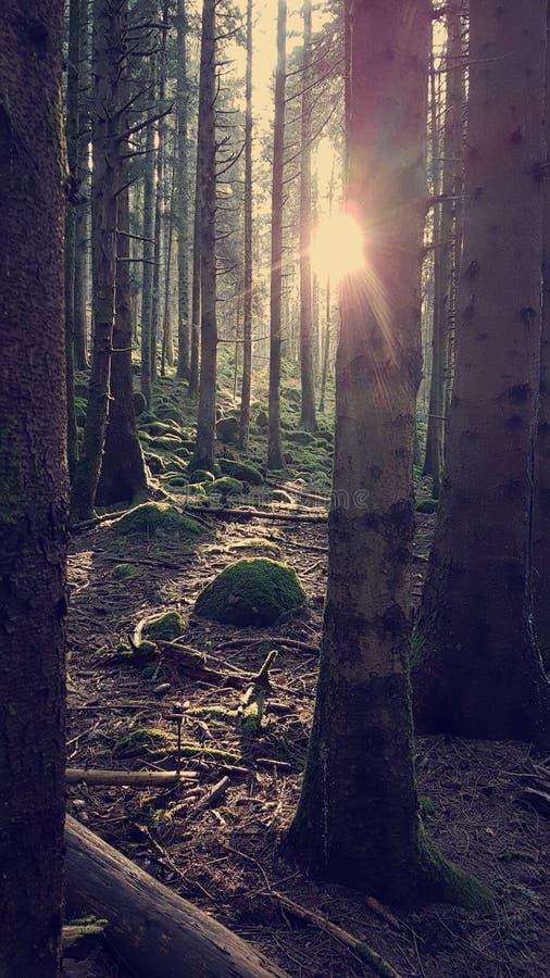 Sun irradia a montanha das árvores foto de stock