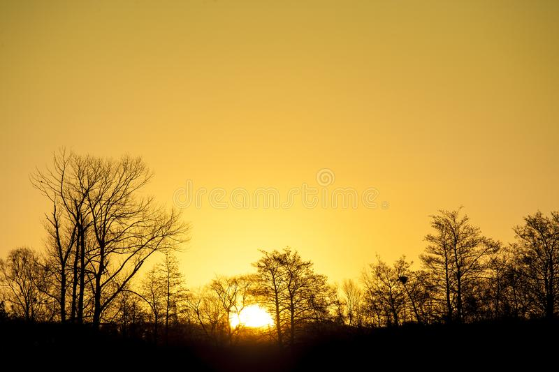 Sun just rising above trees with clear yellow sky behind stock image