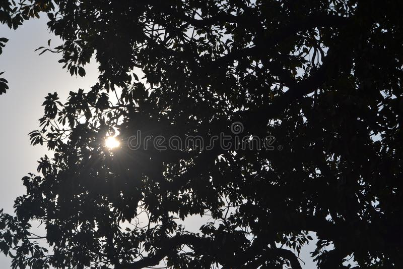 sun in leaves stock photography