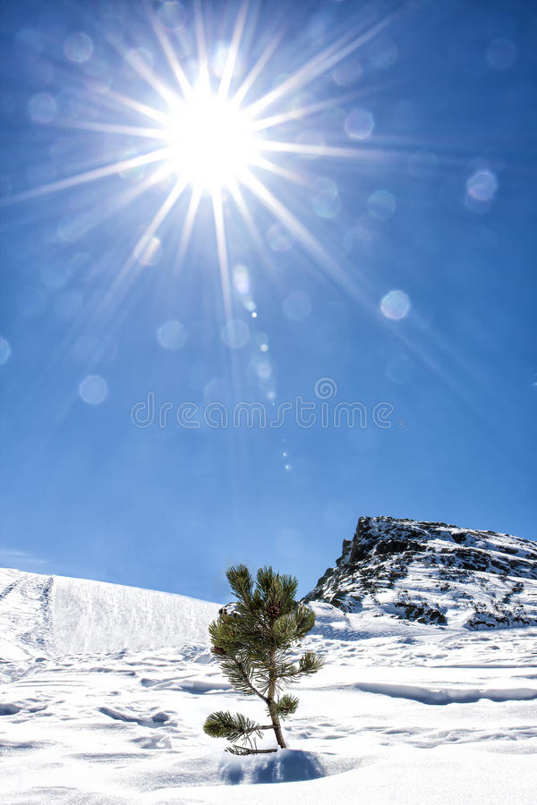 Sun Life Nature Snow Mountain Little Fir Tree Lonely stock photography