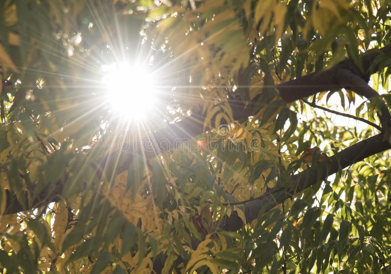 Sun light behind the tree. Sun light behind the yellow and green leaves tree for happy day royalty free stock photography