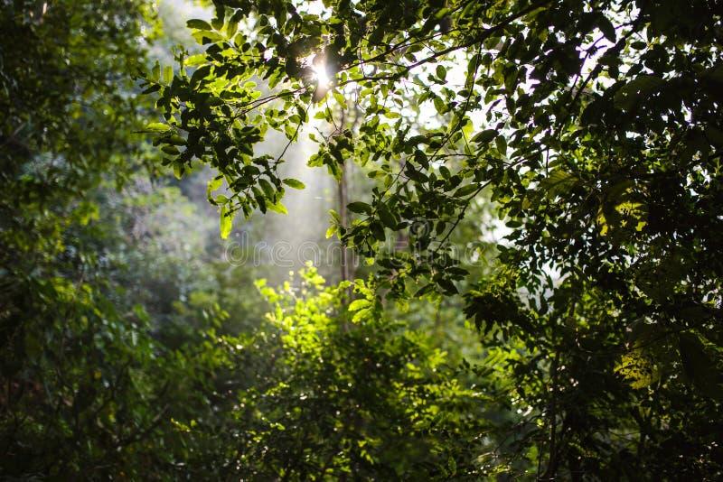 Sun light through the forest, Rishikesh stock photography