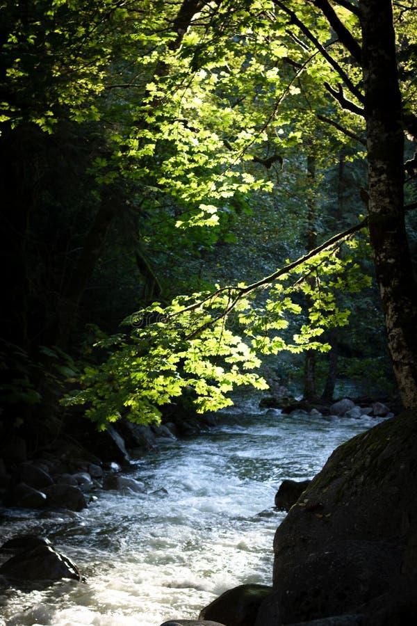 Sun light on leaves over stream royalty free stock photo