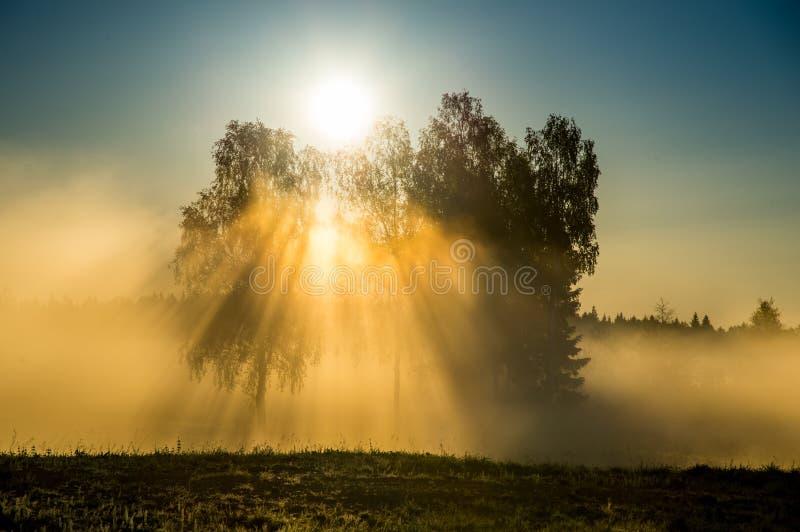 Sun light through mist. Cam early morning stock photo
