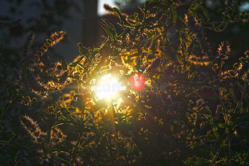 Sun light between plants stock image