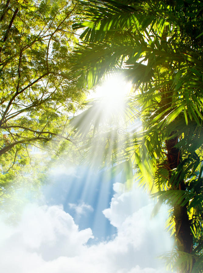 Download Sun Light Rays Through Trees Stock Photo - Image: 13982360